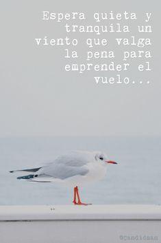 """""""Espera quieta y tranquila un viento que valga la pena para emprender el vuelo"""". @candidman #Frases #Poemas #Poema #Candidman"""