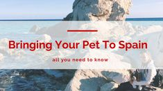 how to take your animal on holiday!