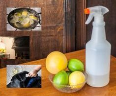 Homemade Flea Killer With Natural Ingredients | eHow