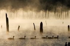 Ducks early morning by Jamie Lusch