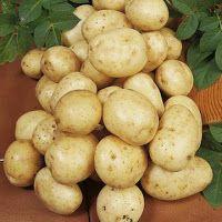 Μητέρα Γη: Πώς καλλιεργούμε την Πατάτα; Nutrition, Irish, Seeds, Potatoes, Vegetables, Plants, Food, Articles, Gardening