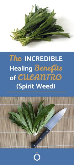 The Health Benefits of Spirit Weed or Culantro Fresh Mint Tea, Healthy Lifestyle Tips, Natural Medicine, Health Benefits, Weed, Natural Remedies, The Cure, Spices, Alternative