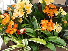 Diy Crafts, Plants, Inspiration, Biblical Inspiration, Make Your Own, Homemade, Plant, Craft, Inspirational