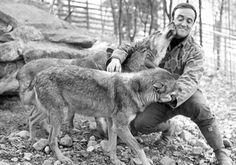 Hoy se cumplen 32 años de la muerte de Félix Rodríguez de la Fuente en Shaktoolik, Alaska. Aún hoy seguimos recordando las importantes lecciones que nos dejó como herencia. Un amor y respeto absoluto a la naturaleza. Félix siempre puso especial interés en el lobo ibérico (Canis lupus signatus).
