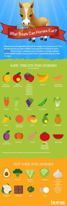Which fruits and vegetables are safe for horses? Which are toxic? This infographic gives you some guidelines.