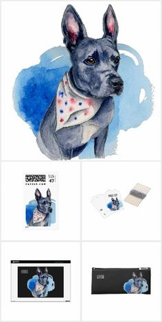 This is a drawing and a watercolor painting of a grey pit bull. He has a scarf with red and blue dots (stars) on it. His prominent feature is his long ears that stand up like a bunny! @stirling.the.pittie (instagram) was the reference for this drawing. Be sure to follow his account to follow this gorgeous pup's adventure!