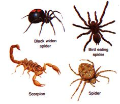 Welcome to the Living world: Arthropoda (Joint legged animals)