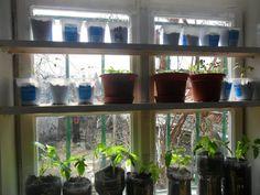 A pet-palackos csodamódszer: így lesz extra hozamú a paradicsomod | Nagybetűs Élet Petra, Plants, Planters, Plant, Planting