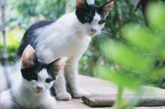 Cats Modelando