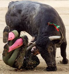 Bullfighting. getting what you deserve, bro.