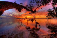Mangroves at Sunset - Key Largo, Florida @ by : Daniel Peckham --- The ubiquitous Florida mangrove trees that grow along the shallow coastline