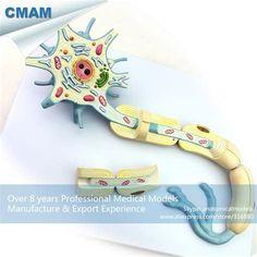 Neuron Model için resim sonucu