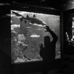 #cretaquarium #cretaquarium10years @Cretaquarium  @CreteRegion #myhersonissos #Greeksummer @VisitGreecegr #DiscoverGRcom #lovingreece  #menoumellada #cretaquarium  @heraklion_info_point  #aquarium #sea #marine #underwater #marinelife #research #fish  #science #mygreeksummer #explore #discovery #kids #fun #crete #myhersonissos #wildlife #photography #biology #geology #visit #nature #shark #medousa  #shark #share  #marine Heraklion, Kids Fun, Crete, Marine Life, Wildlife Photography, Geology, Underwater, Discovery, Shark