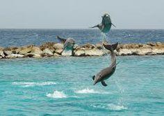 Hard gewerkt en gezwommen met de dolfijnen!