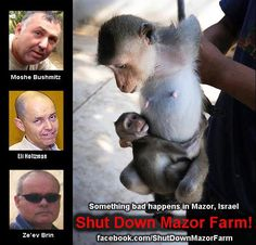 jotter-journal:    ► If each of us shares this, within days the whole world will know the atrocities of Mazor Farm in Israel. Please help shutting down Mazor Farm and save the monkeys from a fate worse than death!    Follow me on my journey for the animals :  Tumblr: http://jotter-journal.tumblr.com/  Twitter:  https://twitter.com/#!/Jotter_Journal                          With Love, Jotter-Journal