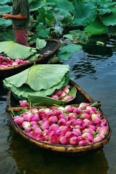 Harvesting lotus on a lake Photo: Collect Beautiful World, Beautiful Places, Beautiful Pictures, Pink Lotus, Lotus Flower, Foto Poster, Belle Photo, Wonders Of The World, Flower Power