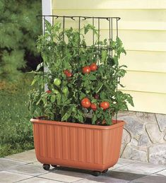 Rolling Self-Watering Tomato Planter With Metal Trellis Plow & Hearth - Modern Deck Planters, Wooden Garden Planters, Metal Garden Art, Basket Planters, Decorative Planters, Tomato Planter, Tomato Trellis, Cucumber Trellis, Garden Trellis