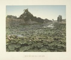 Kusakabe, Kimbei -- Photographer: View of Tokio Castle Wall & Lotus Flower Albumen prints,  Hand-coloured ca. 1890