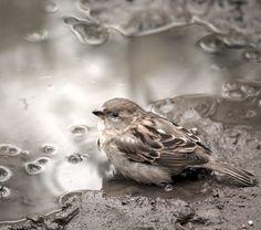 Sweet little sparrow