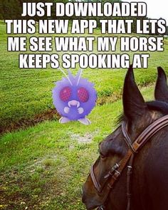 When Pokémon Go Goes Riding - Horses Funny - Funny Horse Meme - - The post When Pokémon Go Goes Riding appeared first on Gag Dad. Funny Horse Memes, Funny Horse Pictures, Funny Horses, Funny Animal Memes, Funny Shit, Funny Animals, Funny Memes, Hilarious, Horse Humor