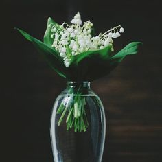 Lily of the Valley | Still Dacha Life  •  •  •  #nature_perfection #natureaddict #nature #naturesbeauty #nature_obsession #visualoflife #stilllifephotography #dailydoseofcolor #vase #flowers #stilllife #gentle #garden #calm #floral_perfection #floral #lilyofthevalley #lowkey #minimal #minimalism #ipreview @preview.app