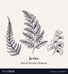 Set with ferns. Plants with leaves isolated on white background. - Set with ferns. – Royalty-free Black Color stock vector You are in the right place about Set with - Botanical Tattoo, Botanical Drawings, Botanical Art, Flower Tattoos, Leaf Tattoos, Sleeve Tattoos, Blatt Tattoos, Hanya Tattoo, Illustration Blume