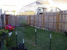 cattle panel arch trellis - great idea using inexpensive items