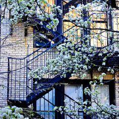NYC. Greenwich Village. Fire Escape in Spring // Amy Coady