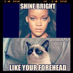 Funniest grumpy cat, best grumpy cat, grumpy cat quotes, grumpy quotes ...For more hilarious photos and funny irony visit www.bestfunnyjokes4u.com/rofl-best-funny-joke-pic/