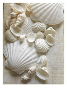 White Sea Shells Premium Poster - White sea shells and coral amongst the flowers on the tables
