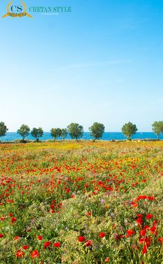 Wild flowers and the sea Crete Greece...