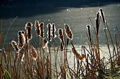 Forêt de Soignes, Bruxelles, Belgique, novembre 2011 © Van de Walle Sébastien