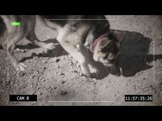 Luna had a bad digging habit. Learn how Brandon taught her to end this behavior!