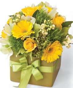 Lime Zest http://www.interflora.co.nz/flowers/product/index.cfm/new-zealand/potted-arrangements/lime-zest