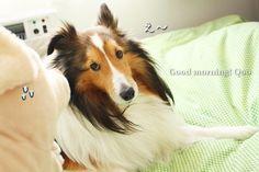 http://blog.goo.ne.jp/ku-kuma0331