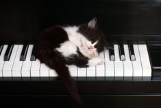 Kitten sleeping on piano
