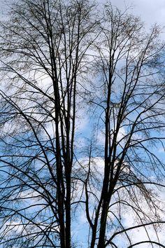 'Sommerlinde im Winter' von Heidrun Lutz bei artflakes.com als Poster oder Kunstdruck $18.02