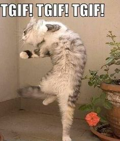 1000+ images about HAPPY FRIDAY CATS on Pinterest   Happy ...