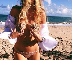 Search sea shells images