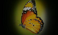 alain_carlier#tree🌳 #forest🌲 #nature #pap #animal #sun #soleil☀️ #trip🚗 #fauna #les animaux et nous #photographer #byalaincarlier #a World offre simplicité #happy d'Ay #forestia #belgium🇧🇪 #adventure parc #escalade ##climbing #butterfly