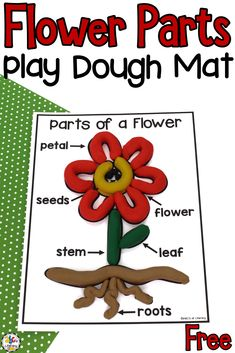 Are you looking for a sensory activity to add to your science unit about nature or living things? This Flower Parts Play Dough Mat is a fun, hands-on activity that lets your kids use their senses and develop their fine motor skills as they are learning all about the parts of a plant. Click on the picture to get this free parts of a flower play dough mat! #playdoughmat #partsofafloweractivity #finemotorskills #sensoryactivity #finemotoractivity