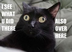 If I had a cat, it would be one like this!