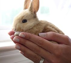 """Just hold me"" bunny . Animals And Pets, Baby Animals, Funny Animals, Cute Animals, Rabbit Life, Pet Rabbit, Baby Bunnies, Cute Bunny, Adorable Bunnies"