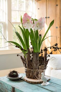 Amaryllis bulbs placed in a large terracotta pot are surrounded by random overlapping sheets of bark. Styling by Karin Lidbeck Brent, Photography by Joe Keller