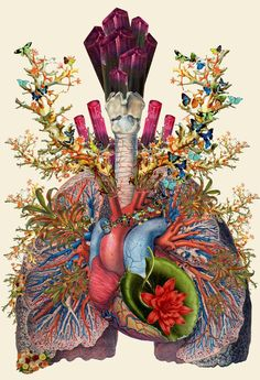 Inspiring collages of the week! Travis Bedel (aka bedelgeuse), is a collage artist that puts together anatomical illustrations with illustrated natural elements. Art And Illustration, Illustrations Médicales, Medical Illustration, Travis Bedel, Art Du Collage, Nature Collage, Medical Art, Medical Drawings, Photocollage