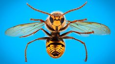 they don't bite. And wasp stings are painful. But there's lots you can do to soothe the pain and avoid an allergic reaction. This guide details what a wasp sting looks like, offers wasp sting treatments and wasp sting remedies, and more! Wasp Stings Relief, Bee Sting Reaction, Remedies For Bee Stings, Prevent Mosquito Bites, Bite Relief, Types Of Bees