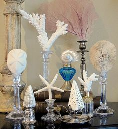 Sea Life Candlesticks - Interesting way to display shell specimans