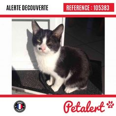 13.03.2017 / Chat / Houesville / Manche / France