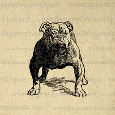 Printable Bulldog Dog Digital Image Download Graphic Artwork Vintage Clip Art. Printable high resolution digital graphic clip art for fabric transfers, making prints, tote bags, and more. Great for use on etsy items. This digital image is high quality, large at 8½ x 11 inches. Transparent background version included with every graphic.