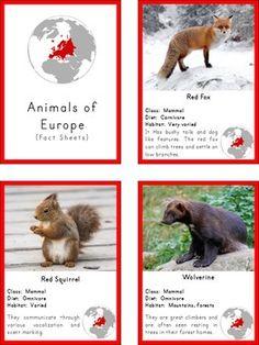 Montessori Animals of Europe 3 Part Cards and. by Pinay Homeschooler Shop Montessori Homeschool, Montessori Activities, Educational Activities, Infant Lesson Plans, Animal Habitats, Montessori Materials, Thinking Day, Animal Cards, Kids Education